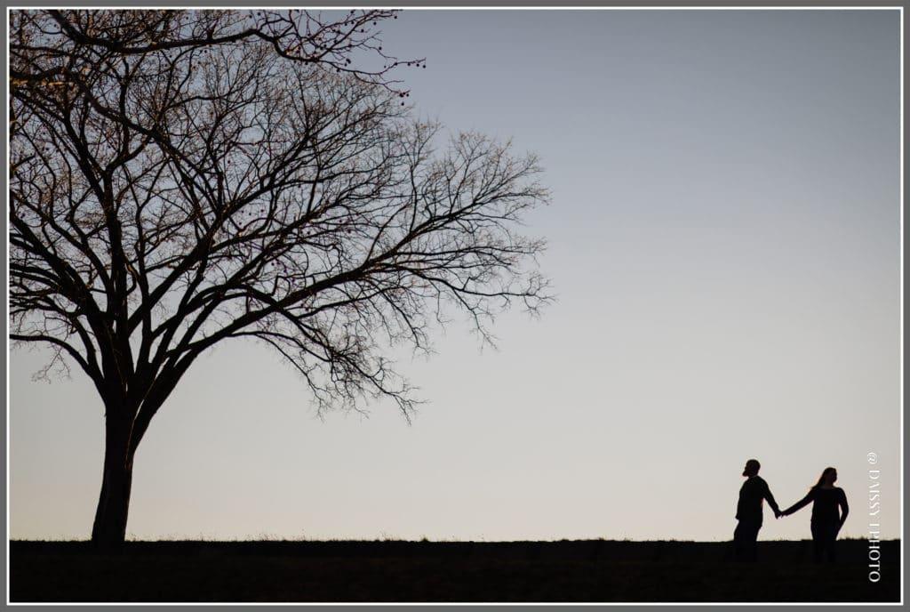 Fort Monroe tree